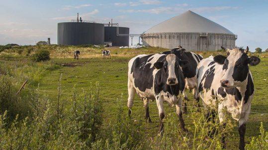 Incentivi biogas
