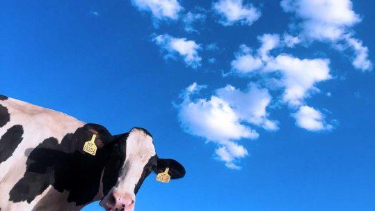 Fiera del bovino Cremona